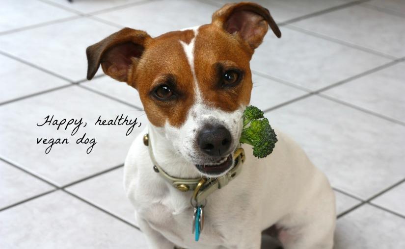 Healthy, happy, vegandog.