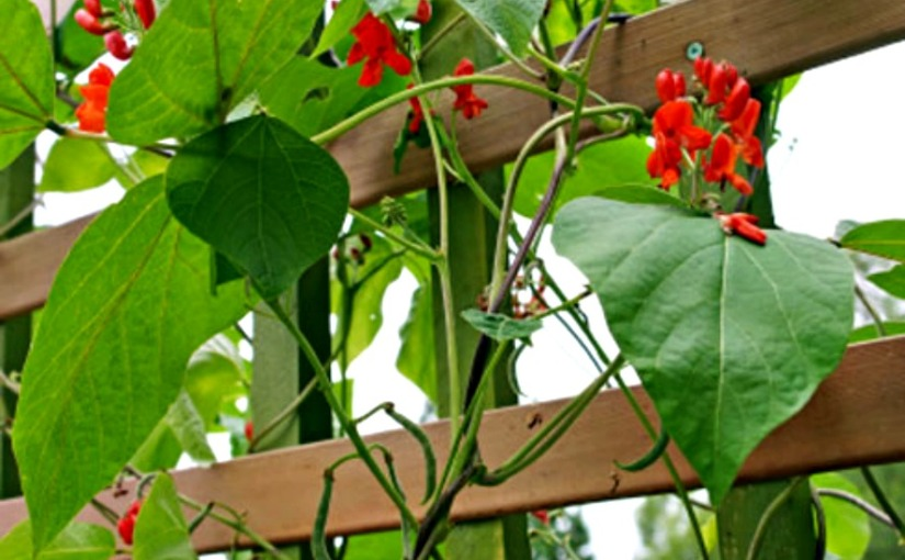 Start your very own vertical garden and eat healthy food for free!