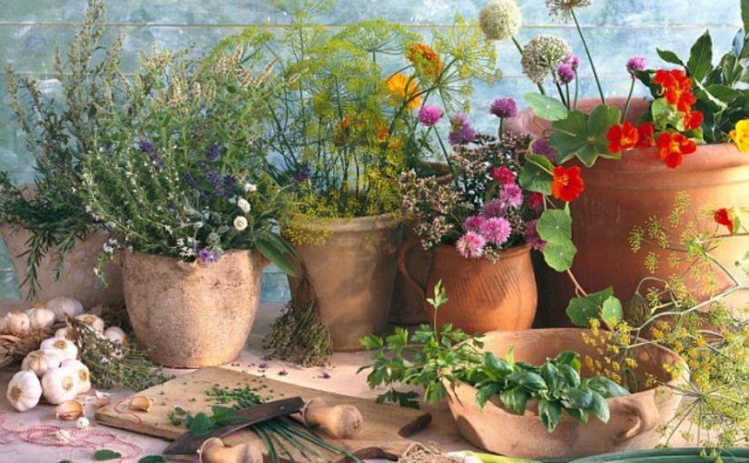 The magic of herbs  – allvegan.