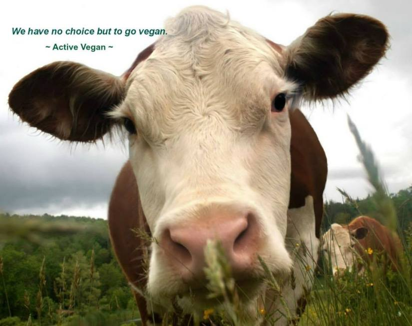 Why going vegan is important , right here, right now in this generation.